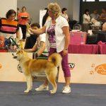 V1 Bester Jugendhund IHA Klagenfurt Richter: Lemo Niksa, (HR)